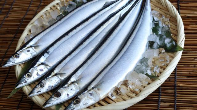 【2020】サンマの値段はいくら?超高値の高級魚になった理由も!4